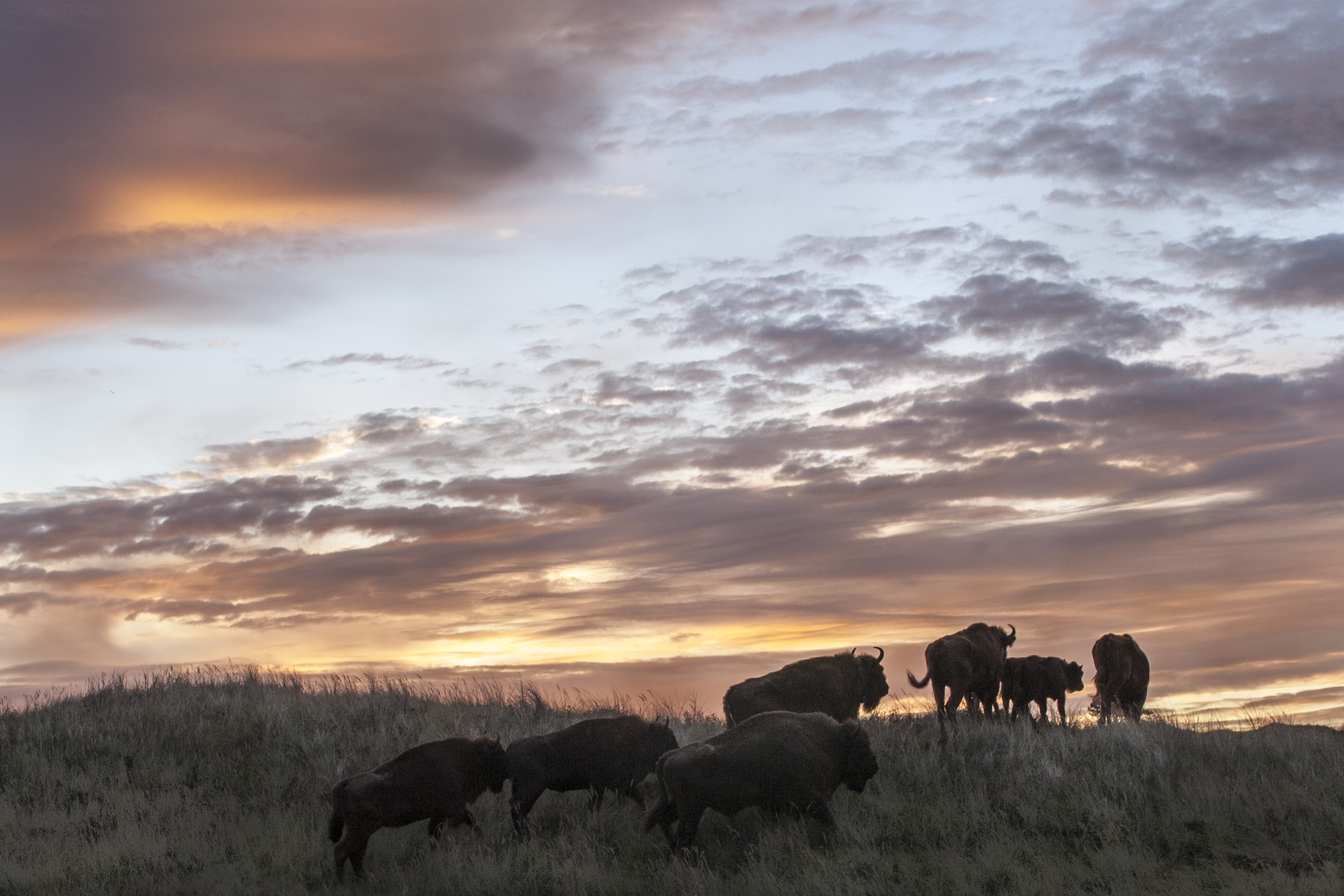 Bison_in_the_sky_CCRuudMaaskant.jpg